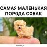 """Мистические Видео on Instagram: """"Самая маленькая порода собак 🐕🐩 By: BRAIN TIME Жми два раза на экран ❤  Подпишись на @mistika_tv ➖➖➖➖➖➖➖➖➖➖➖➖"""""""