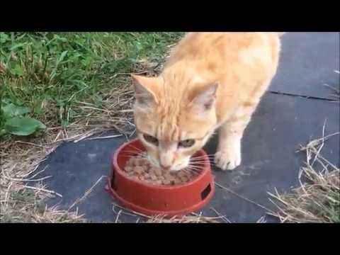 Мои бездомные кошки. Два дня из дачной жизни.)