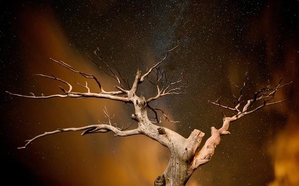 Сухое дерево Агриппине Григорьевне Кустанаевой было 85 лет. Про таких как она, в народе говорят: «Сухое дерево долго скрипит». Всех радостей в её жизни было – походы по воскресеньям в церковь,