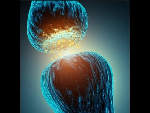 Nervous System Acetylcholine (ACh) and Norepinephrine (NE) Receptors