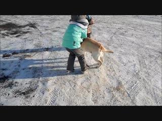Лабрадор и дети. Labrador and children. #FILATOVCHANNEL #Labrador #дети#лабрадор #Тобольск #тюменскаяобласть #Россия #tyumenregi