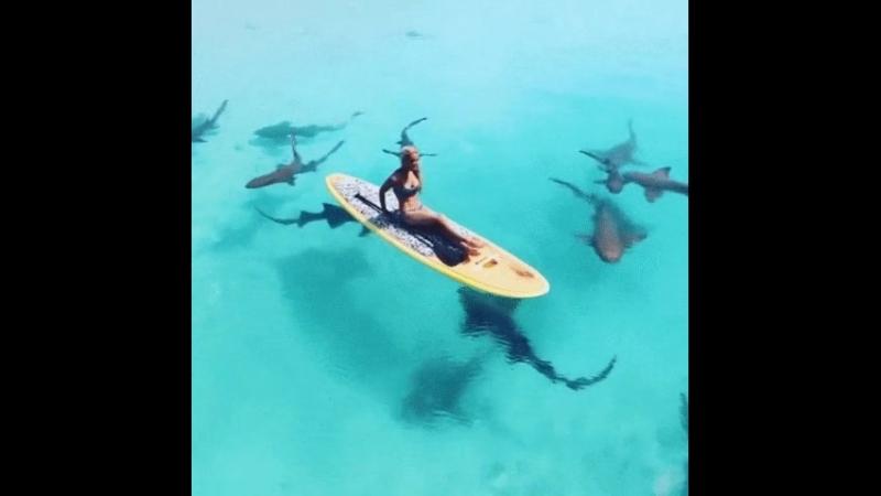 Ужасы нашего городка В окружении акул