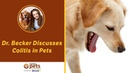 Колит у домашних животных Colitis in Pets