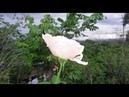 BellezaNatural y un clima deceoso de llover SC CR CA
