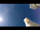 The seagull steals a Travelers camera and then returns it