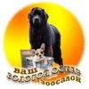 Стрижка собак в Ярославле | Школа груминга