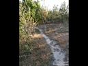 Осінь в посадці (с. Раків Ліс)