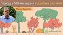 Лесосад с 500-ми видами съедобных растений