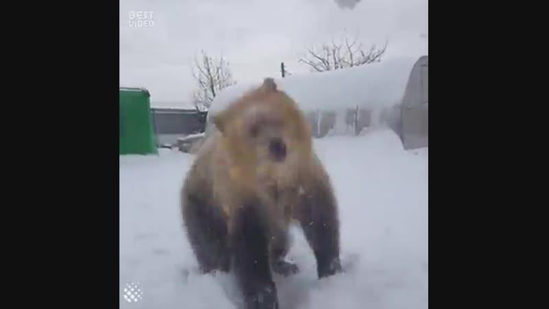 Ну какой медведь не любит снежок 🤗