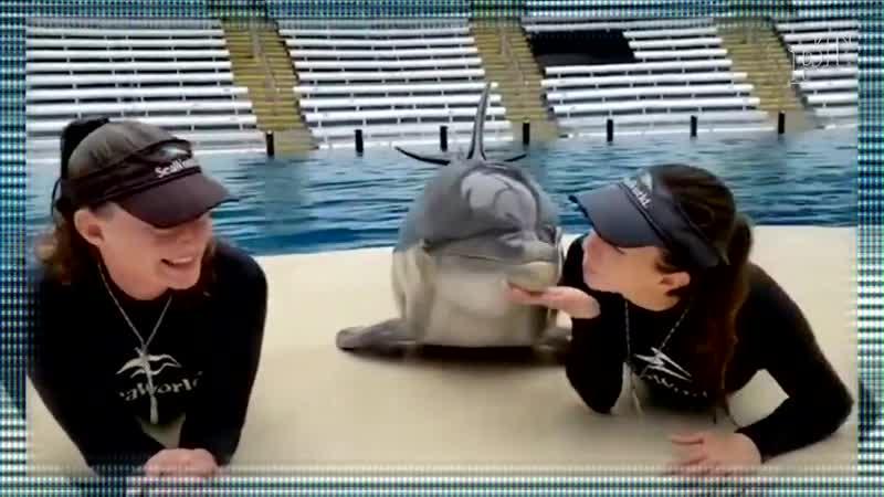 Очаровательны видео Дельфин в SeaWorld Орландо поцелуйчика.