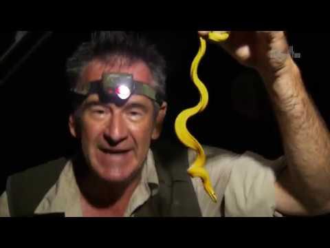 Десять смертельно опасных змей / Ten deadliest snakes - Коста Рика