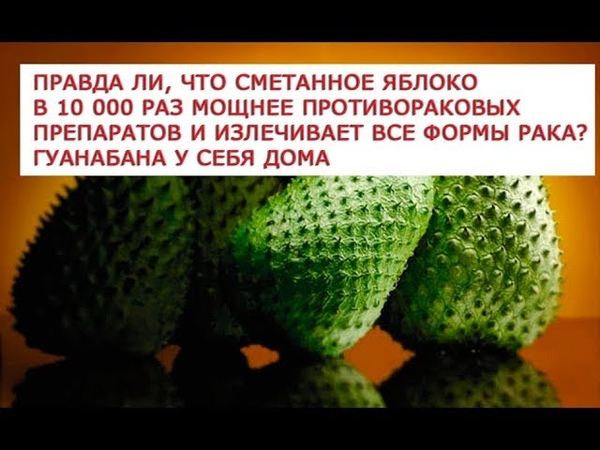 Гуанабана сментанное яболоко Правда ли что сметанное яблоко в 10 000 раз мощнее противораковых пр