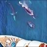 """Океанское Притяжение on Instagram: """"Завораживает! А как бы вы себя чувствовали на этой лодке? 🐋 _ By @ocean_advocates @whales_o"""