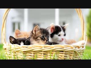 Корзина котят / Cat basket