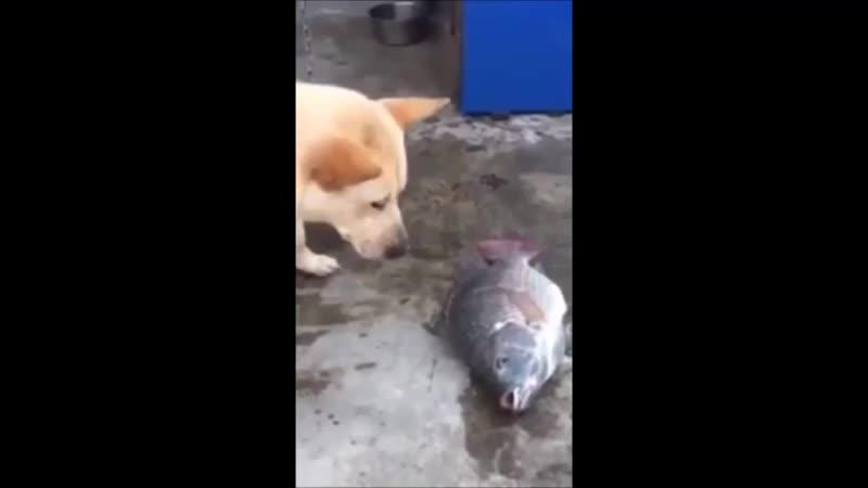 Песик спасает рыбу