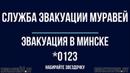 Служба Эвакуации Муравей (Минск)
