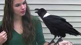 Funny Birds Talk, Mimic, Sing &amp Dance - Parrots Bark, Meow, Imitate Phone &amp Car Alarm Compilation