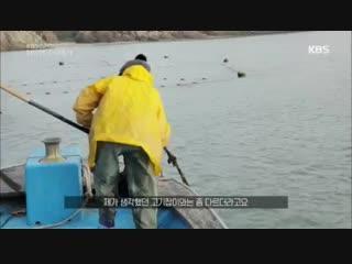 KBS спэшл/ 단의 한국 이야기 - Корейская история Даниэля (кор. + корейские субтитры)