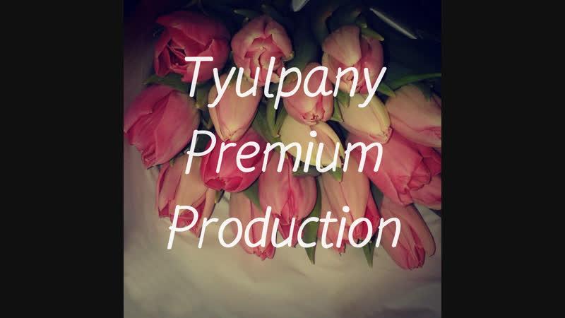 Тюльпаны | Ptemium | Х-Берёзовка