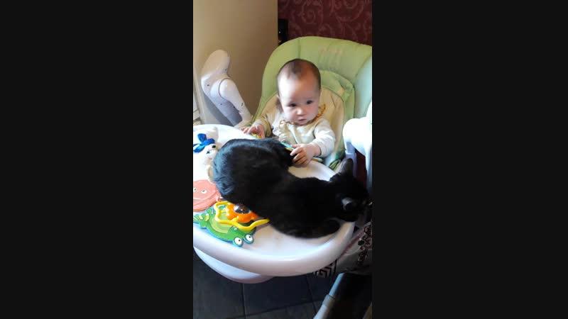 Ника играет с кошкой