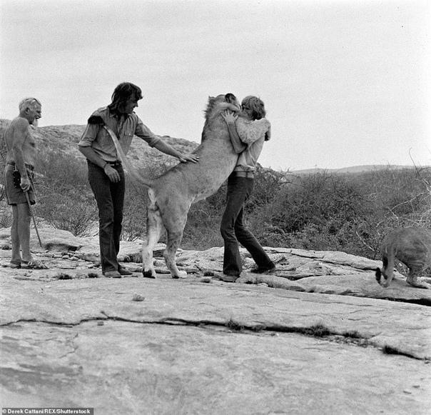 Это случилось почти 50 лет назад в Лондоне. Два молодых парня, Джон Рендалл и Эйс Берк, купили в универмаге Harrods львёнка. Не удивляйтесь: в 1969 году в крупнейшем лондонском универмаге действительно существовал отдел, где продавали экзотических животны