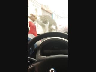 Guy gets instant karma for trying to scare a cat.