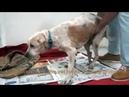 Il Commovente Addio Di Un Cane Randagio