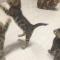 mango_akina_kimiko video