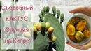 Кипр ♥ Съедобный кактус ПапутсОсика Опунция ♥ Как почистить и как кушать ♥ Papoutsosika