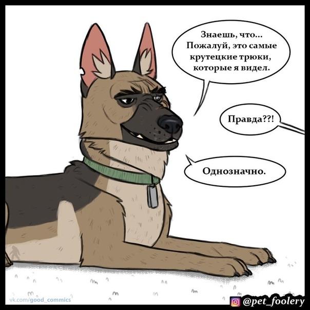 Безбашенные трюки Иллюстратор: Pet_fooleryhttp://v.com/wall-68670236_533740