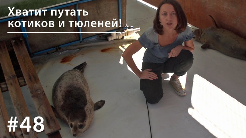Хватит путать котиков и тюленей! Всё как у зверей 48