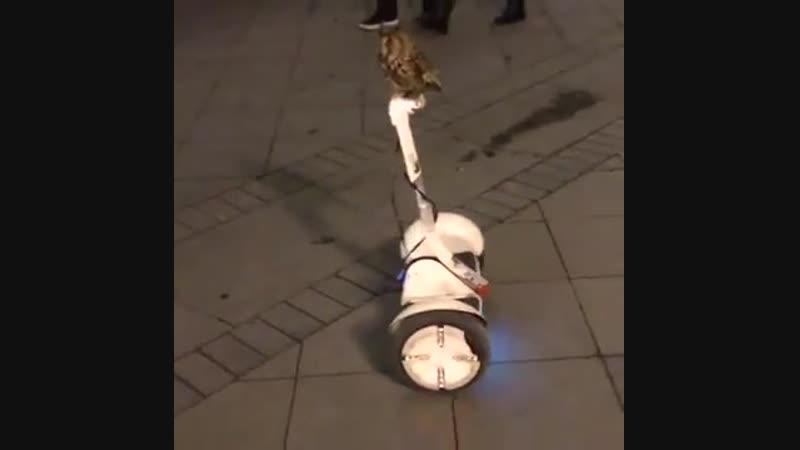 Owl Fedya rides Segway like a pro