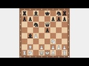 Сицилианский гамбит Обучение шахматам