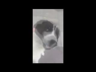 Удивительная и милая история из Тбилиси. Мужчина нашел на улице своего пропавшего 3 года назад пса.