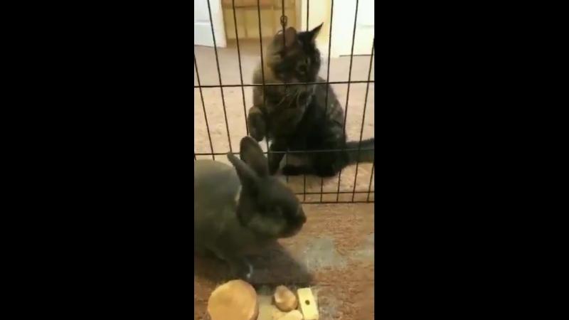 Bunny x kitten