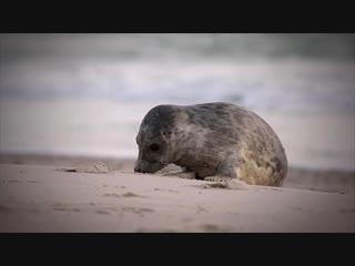 Отличаем котиков от тюленей