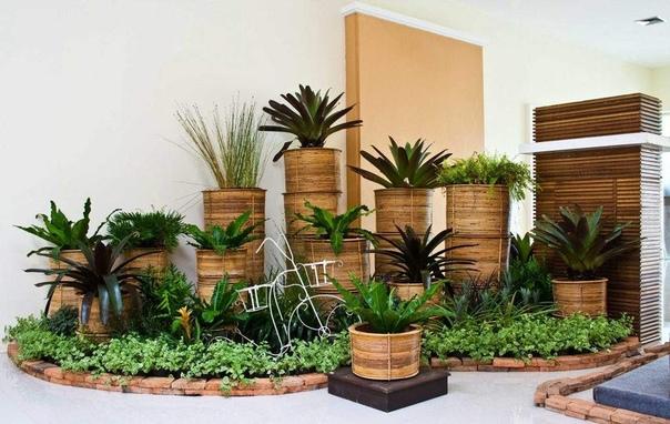 КОМНАТНЫЕ РАСТЕНИЯ ОЧИЩАЮЩИЕ ВОЗДУХ Доказано, что по сравнению с уличным воздухом, концентрация вредных веществ в воздухе внутри помещений выше в 1,5 4 раза. Разумеется, комнатные растения не