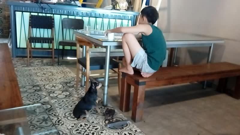 маленький вьетнамец и собачка