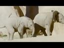 Поединок слонят