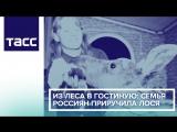 Из леса в гостиную- семья россиян приручила лося