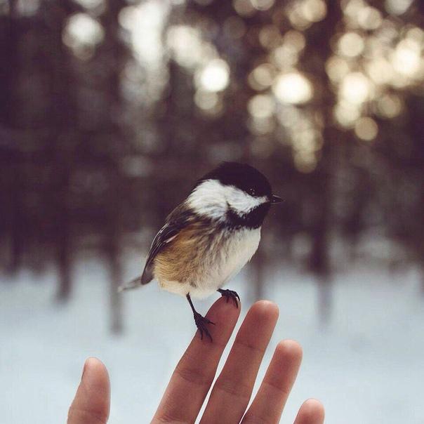 Волшебство  это вера в себя, и когда тебе это удается, то удается и все остальное!....