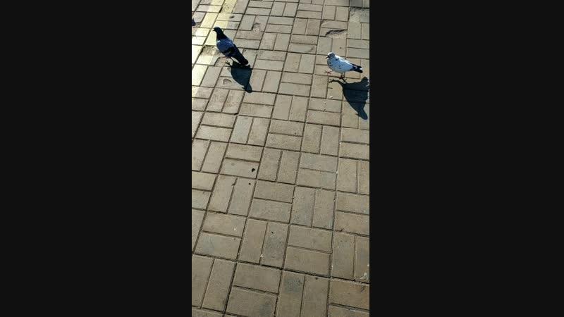 кормлю голубей