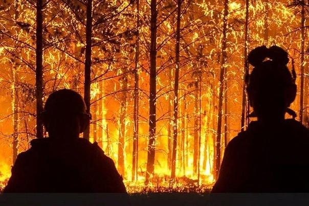 Почему не тушат лесные пожары в Сибири В Красноярском крае, Иркутской области, Бурятии, Забайкалье и Якутии продолжают гореть миллионы гектаров леса. Решения не тушить огонь принимаются на