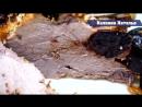 Вкусное сочное мягкое мясо в духовке с черносливом и чесноком