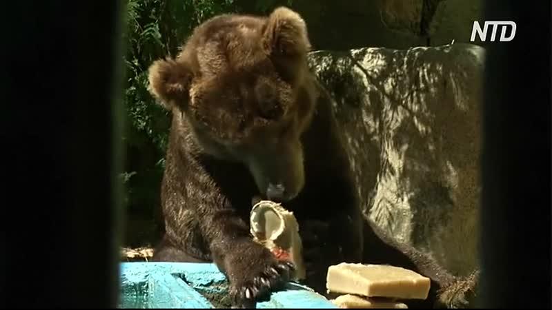 Мороженое и душ спасают от жары питомцев зоопарка в Рио-де-Жанейро