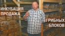 Подготовка субстрата и инкубациия грибных блоков Продажа грибных блоков Фермер Олег Топорков