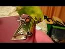 КАК ПОПУГАЙ ПОМОГАЕТ ДЕЛАТЬ УРОКИ ПОЛИНЕ или МЕШАЕТ ▶️ ЗАБАВНЫЙ ПОПУГАЙ ▶️ зеленый попугайчик TV