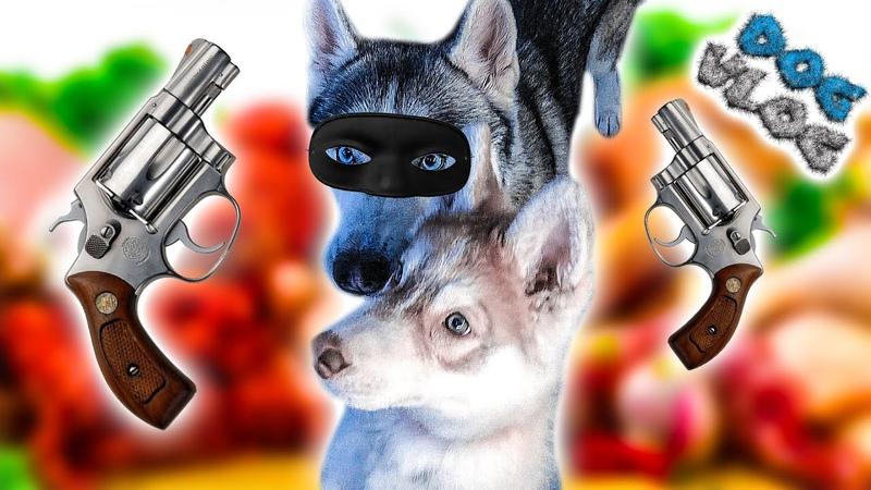 DOGVLOG: ИДЁМ ГРАБИТЬ МАГАЗИН! 😂 Хаски Бандит. Говорящая собака