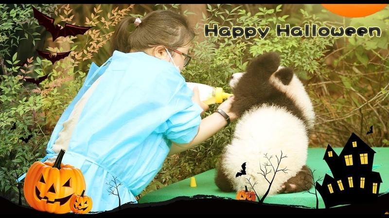 Halloween For Little Pandas Trick Or Treat iPanda