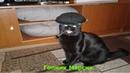Бешеный кот!